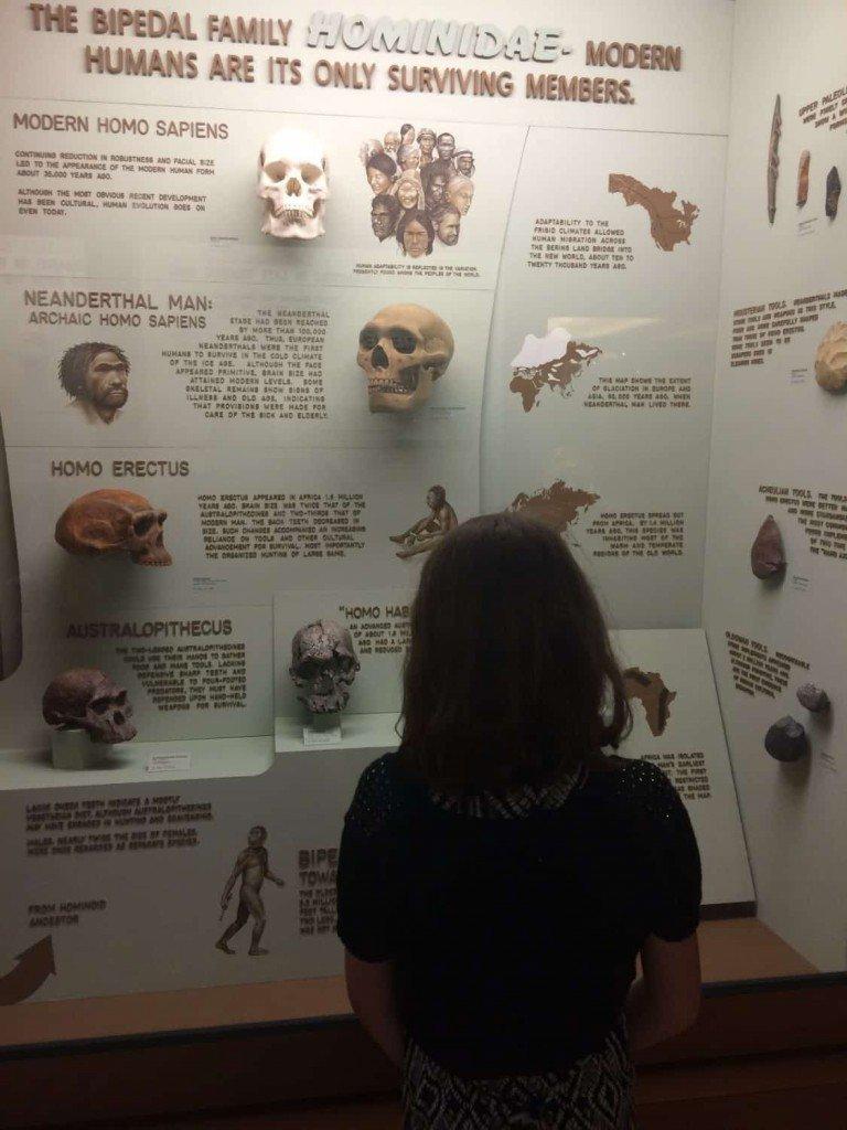 Natural History Museum Hominidae Skulls