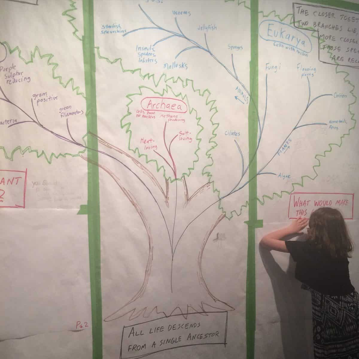Ideas for the Tree of Life at UM Museum of Natural History