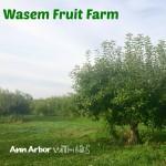 Wasem Fruit Farm Orchard View