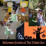 Halloween Events at the Toledo Zoo