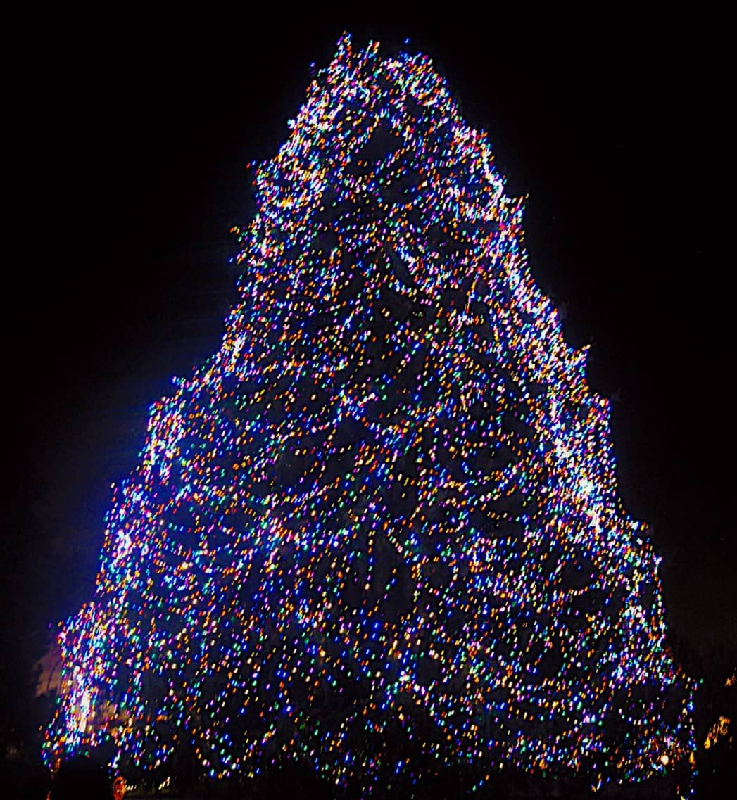 Don't Miss Toledo Zoo's Lights Before Christmas | A2withKids