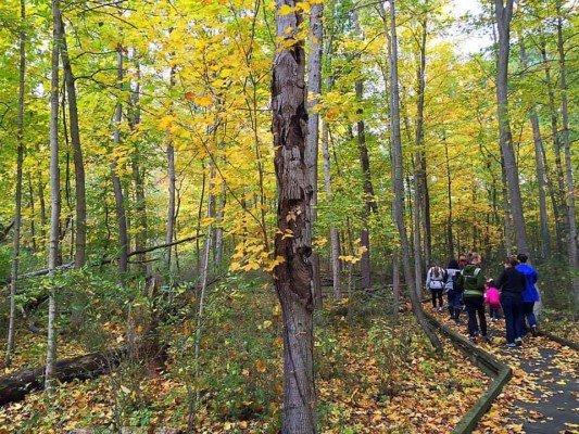 Family Friendly Ann Arbor Hikes - Parker Mill