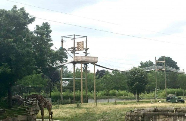 Toledo Zoo Aerial Adventure Course - Course View