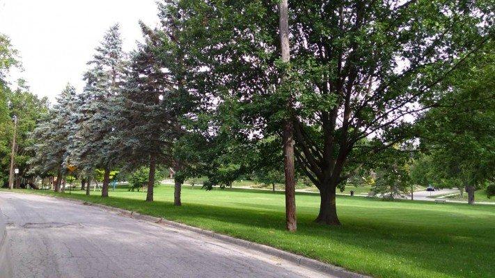 Maryfield Wildwood Park - Grassy Fields