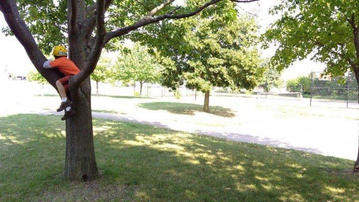 Cranbrook Playground - Climbing Tree